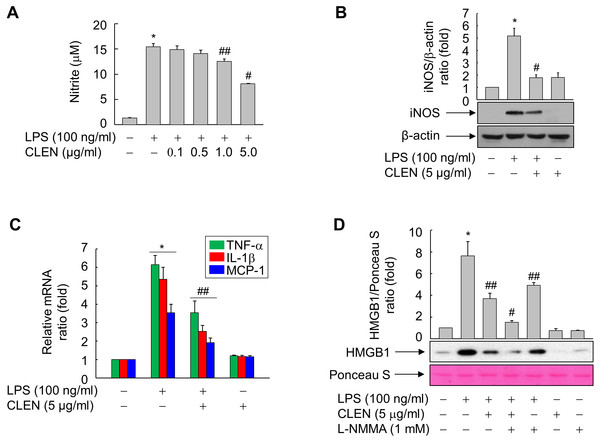 Effect of the Curcumin longa extract-loaded nanoemulsion (CLEN) on the production of nitric oxide (NO) and the expression of inducible NO synthase (iNOS), tumor necrosis factor (TNF)- α, interleukin (IL)-6, and monocyte chemotactic protein (MCP)-1 in RAW264.7 cells exposed to lipopolysaccharide (LPS).