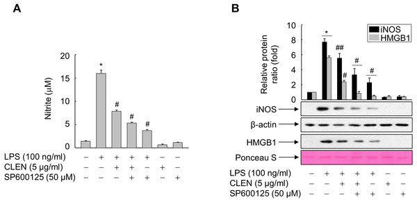Role of JNK in the ability of Curcumin longa extract-loaded nanoemulsion (CLEN) to inhibit the lipopolysaccharide (LPS)-induced release of high-mobility group box 1 (HMGB1).