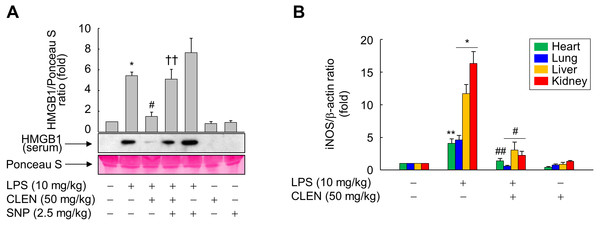 Effect of Curcumin longa extract-loaded nanoemulsion (CLEN) on the circulating high-mobility group box 1 (HMGB1) levels and tissue expression of inducible nitric oxide synthase (iNOS) in endotoxemic mice.