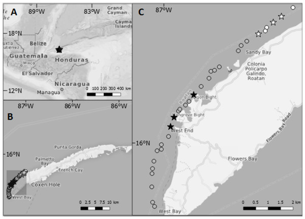 Maps showing the location of Roatan and the study sites inside Sandy Bay-West End Marine Reserve.