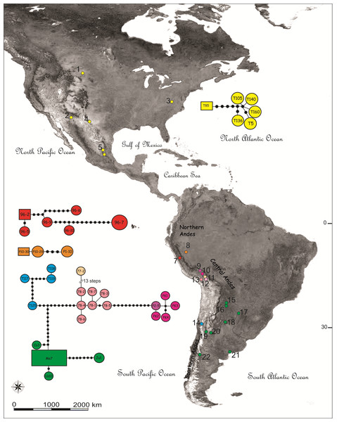 Map showing the sampling locations and haplotype networks built with a concatenated data set of COI and NADH5 mitochondrial genes of species of the Trimerotropis pallidipennis complex.