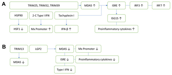 Innate antiviral immunity of fish against nodavirus infection.