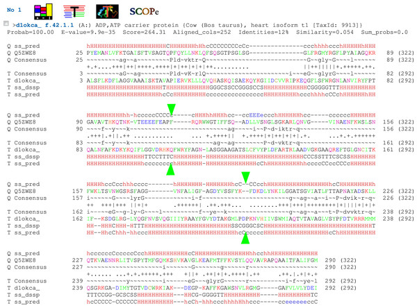 Protein sequence alignment between Lpg1137 (top, marked as Q5ZWE8) and bovine ADP, ATP carrier protein (bottom, marked as d1okca) obtained from the HHpred server.