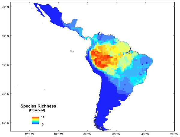 Spatial distribution of species richness for New World monkeys in the Neotropics.