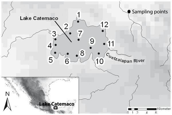 Map of the sampled localities in the Lake Catemaco.