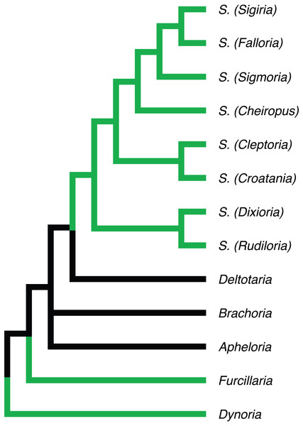 Phylogenetic relationships of Apheloriini genera as proposed by Shelley & Whitehead (1986), based on a combination of morphological and geographic data.
