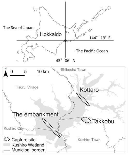 Locations (n = 3) where tracked sika deer (Cervus nipponyesoensis; n = 28) were captured in Kushiro Wetland.