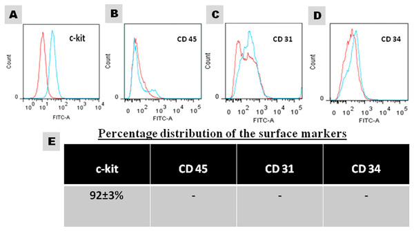 Characterization of the cultured CSCs at passage 3.
