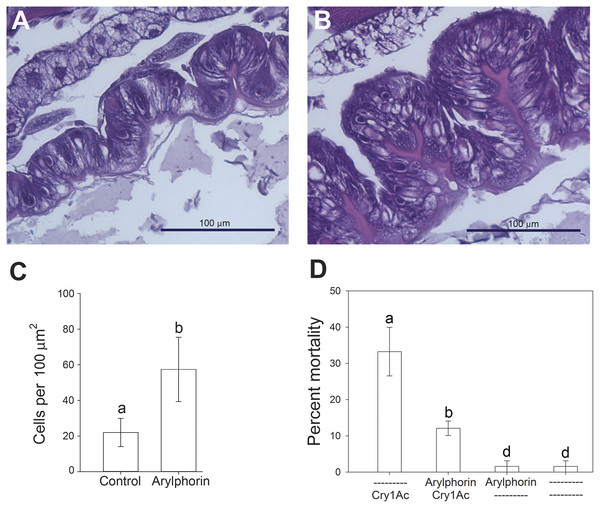 Effect of feeding on arylphorin on midgut hyperplasia and susceptibility to Cry1Ac.