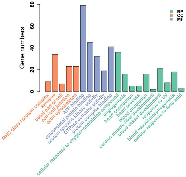 GO enrichment analysis of DMGs between Tibetan chicken (TC) and Chahua chicken (CH).