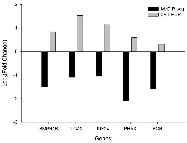 The fold change (FC) in mRNA expression level of five differentially methylated genes (DMGs) in Tibetan chicken (TC) and Chahua chicken (CH).