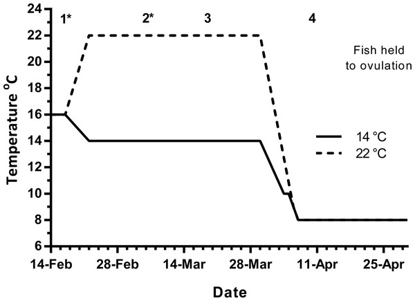 Thermal treatment regimes, hormone pellet implant dates (indicated by asterisk) and sampling times (1–4) for maiden S. salar held at 14 or 22 °C in late summer and autumn.