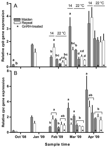 Mean + SEM (n=6–7) hepatic zona pellucida B (A) and C (B) gene expression levels of maiden and repeat spawners exposed to 14 or 22°C with or without GnRH implantation.