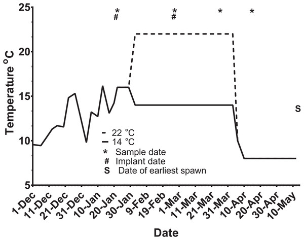 Thermal adjustment and hormone implantation timeline for untreated and GnRH-treated maiden and repeat spawning female Atlantic salmon broodstock maintained at 14 or 22°C during vitellogenesis.