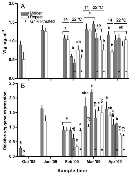 Mean + SEM (n=6–7) plasma vitellogenin (A) levels, and hepatic vtg gene expression levels (B) of maiden and repeat spawners exposed to 14 or 22°C with or without GnRH implantation.
