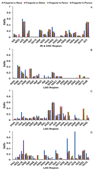 Ka/Ks ratios of 78 protein-coding genes in Fragaria, Rosa, Malus, Pyrus and Prunus.