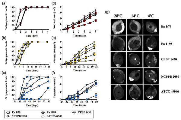 E. amylovora virulence assays in immature loquats (cv. Tanaka) at 28°C (A, D), 14°C (B, E) and 4°C (C, F).