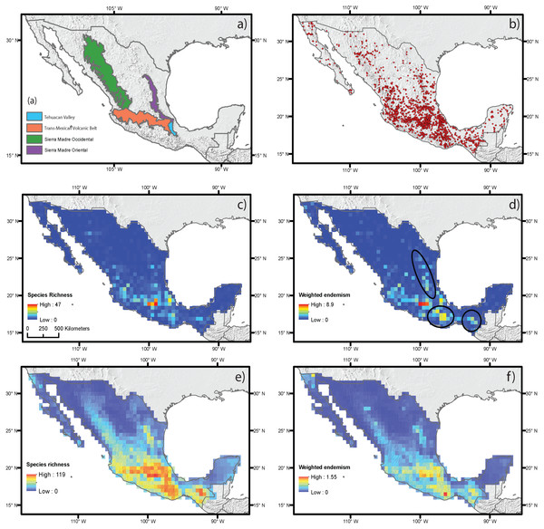 Estimated species richness and weighted endemism for the monocot geophyte species distributed in Mexico based on ecological niche modeling using current climate variables.