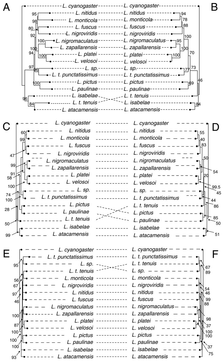 Phylogenomic Analysis Of The Chilean Clade Of Liolaemus