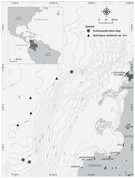 Map of study area, indicating the sampling stations where Kudinopasternakia siegi and Sphyrapus caribensis sp. nov. were found.