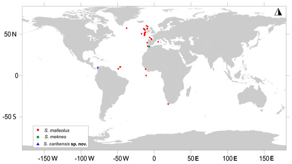 Map showing the worldwide distribution of Sphyrapus.