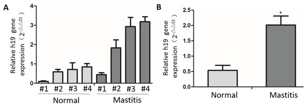 The expression of H19 in normal and mastitic tissue of bovine mammary glands.