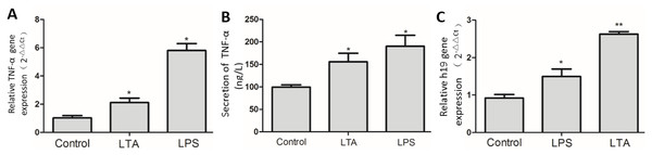 Expression of H19 in MAC-T cells with or without LPS or LTA treatment.