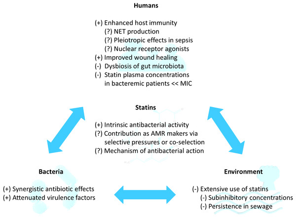 Potential of statins as repurposed novel adjuvant antibiotics for infections in the statin-bacteria-human-environment continuum.