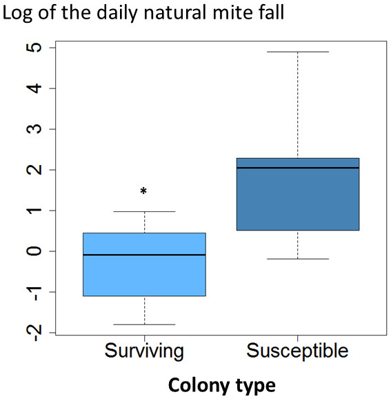 Daily natural mite fall in surviving and susceptible colonies.