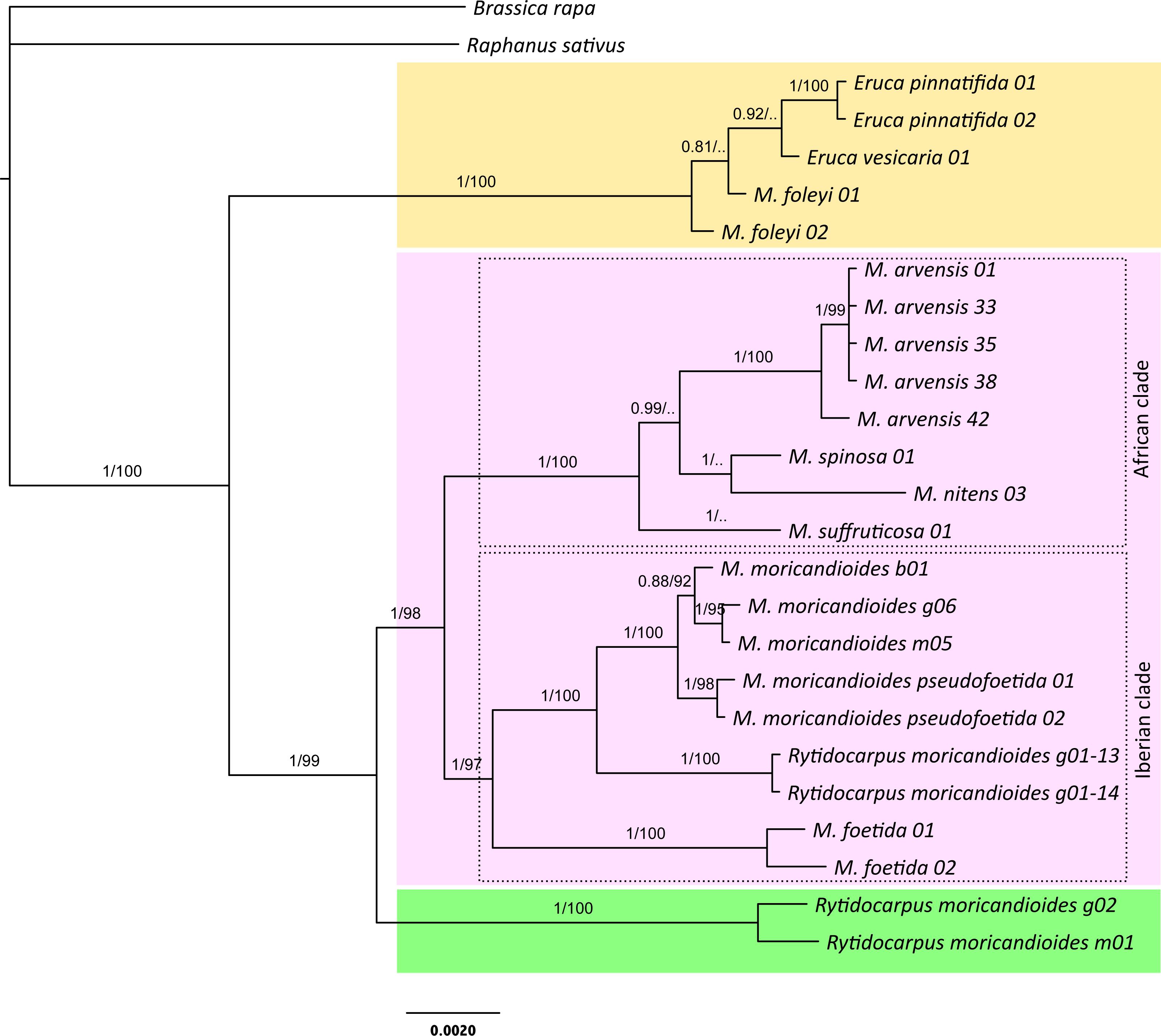 Molecular phylogeny and evolutionary history of Moricandia DC ...