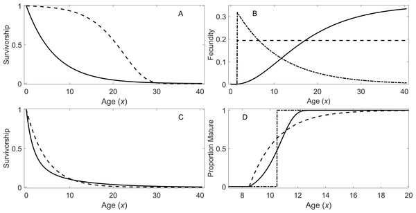 Survivorship, fecundity, and maturation schedule.