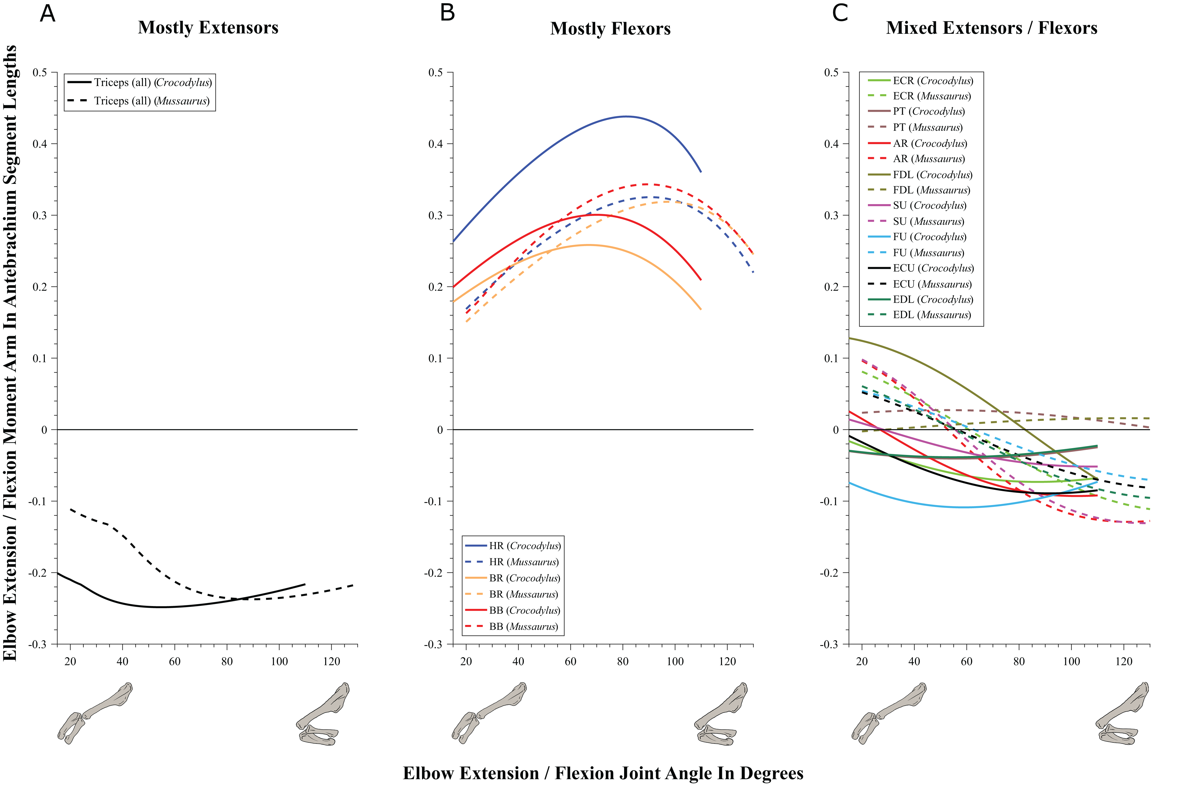 Forelimb muscle and joint actions in Archosauria: insights from ...