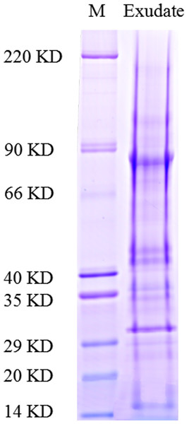 Functional classification of proteins identified in sclerotial exudates from Sclerotinia ginseng.