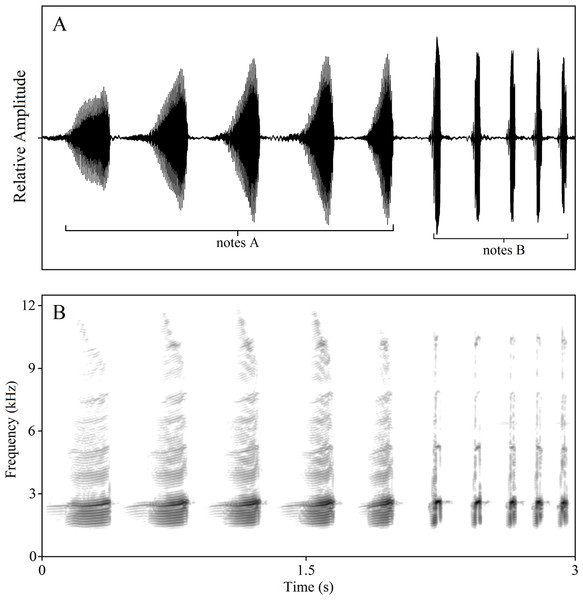 "Amplitude-modulated waveforms (A) and spectrograms (B) of male compound call ""5A5B""."