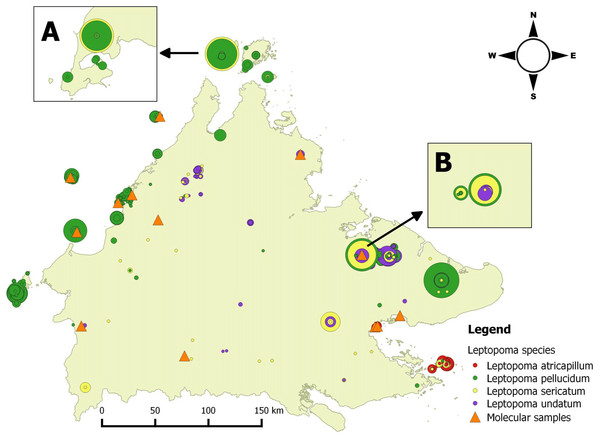 Distribution map of four Leptopoma species in Sabah based on the records from BORNEENSIS Mollusca collection, Universiti Malaysia Sabah and localities of molecular samples.