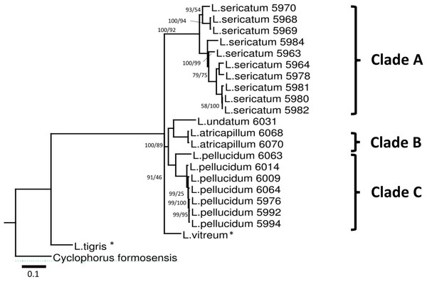 Bayesian inference tree of Leptopoma spp. based on concatenated dataset of 16S rDNA, COI and ITS-1.