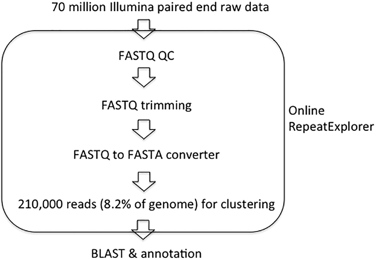 Genome size and identification of abundant repetitive sequences in