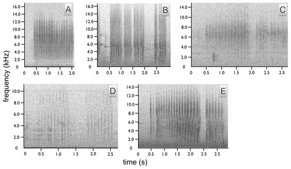 Spectrograms of Astrapia non-vocal wing sounds.