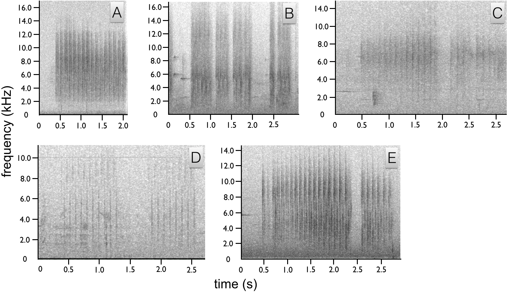 Visual and acoustic components of courtship in the bird-of