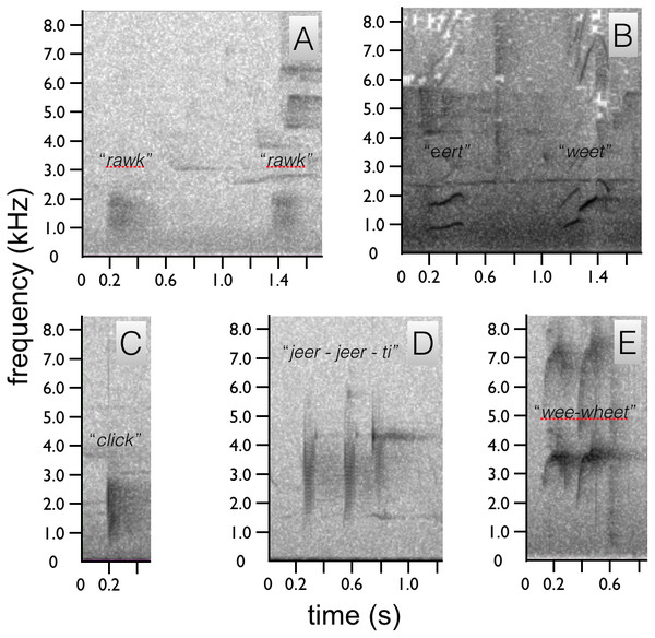 Spectrograms of Astrapia vocalizations.