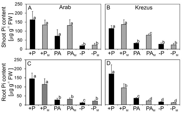 Inorganic phosphate (Pi) content in shoots (A–B) and roots (C–D) of plants treated (M) or not treated with AM fungi.