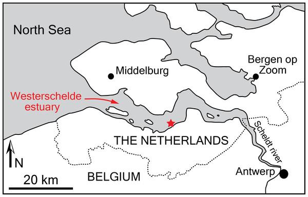 Locality of the holotype of Scaldiporia vandokkumi.