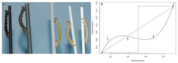 The response of B. betularia larvae to a gradient in dowel luminance.