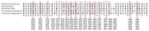 The varied amino acid and corresponding nucleotide sequences of atp8 gene in five Tetrigidae mitogenomes.