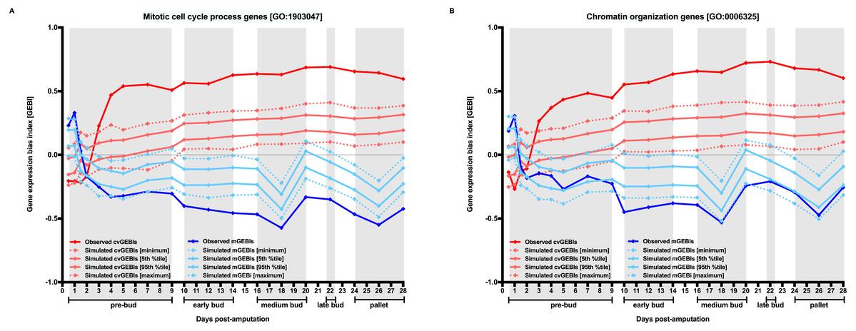 Transcriptome dynamics along axolotl regenerative