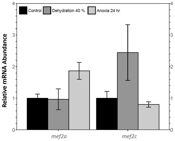 Analysis of mef2 genes in the wood frog skeletal muscle under control, 40% dehydration, and 24 h anoxia conditions, as determined using qRT-PCR.
