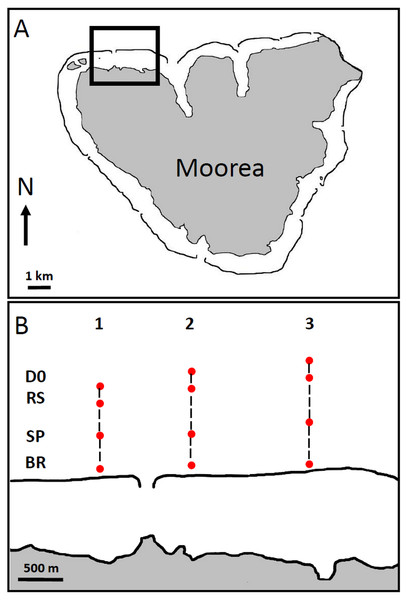 Maps of Moorea Island (A), showing the locations of the recording sites along the 3 transects on the North Coast (B).