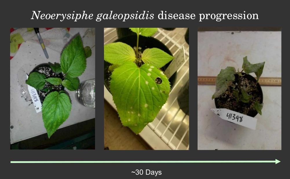 Foliar microbiome transplants confer disease resistance in a