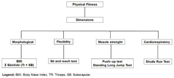 Organization of physical fitness dimensions: BMI, Body Mass Index; TR, Triceps; SE, Subscapular.
