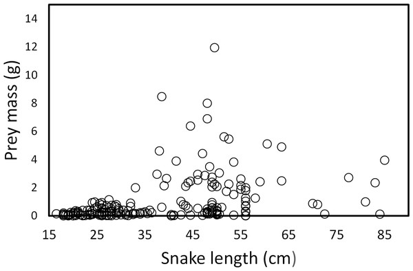 Prey mass as a function of snake length (SVL, cm) of (T. eques) in México (r= 0.42, F1, 326= 71.52, P < 0.001).
